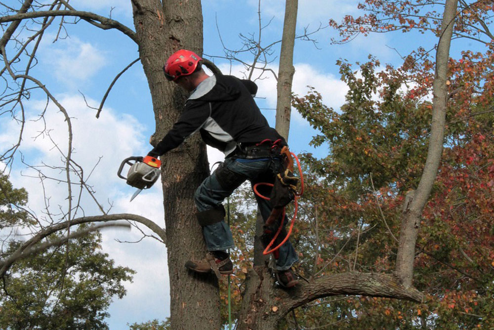 become a tree trimmer