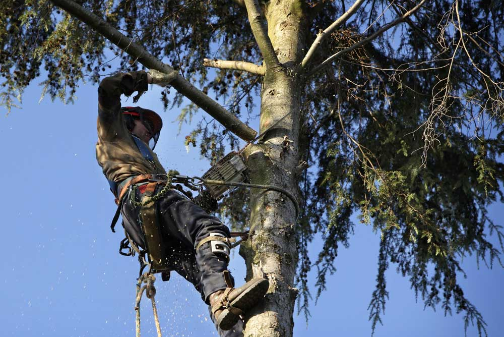 become an arborist